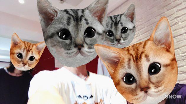 猫ファミリー
